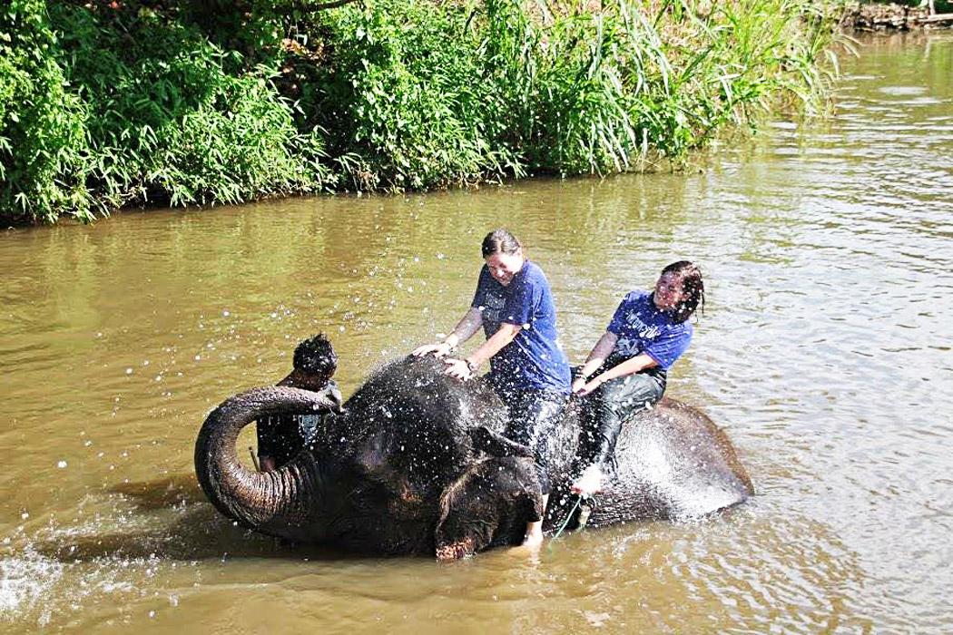 PS_elephant3
